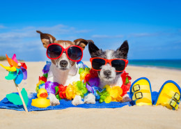 couple of two dog sitting close together on towel at the beach on summer vacation holidays, on a honeymoon retreat